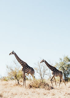 hanaley-travel-southafrica-low-28.jpg