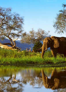 mana-pools-zimbabwe-1.jpg