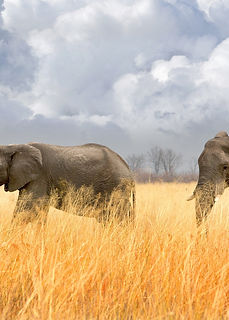 elephants-hwange-national-park-zimbabwe.