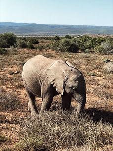 hanaley-travel-southafrica-low-30.jpg