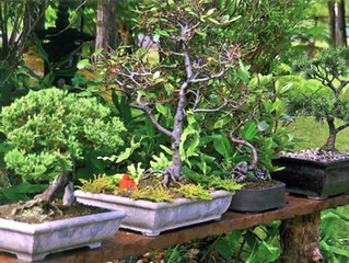 Bonsai Classes with Bill Newton