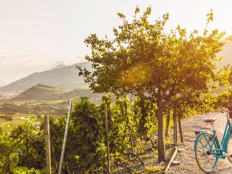 Idée sortie facile: vélo et picnic le long du Rhône
