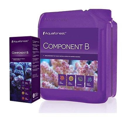 Component B קומפוננט