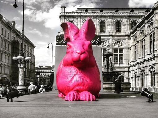 follow the pink rabbit