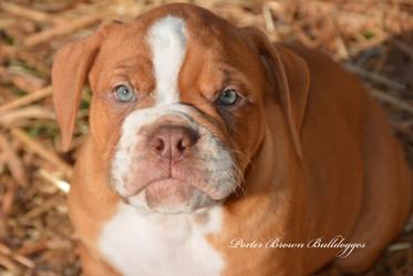 Duke (Betty x Neumann pup)
