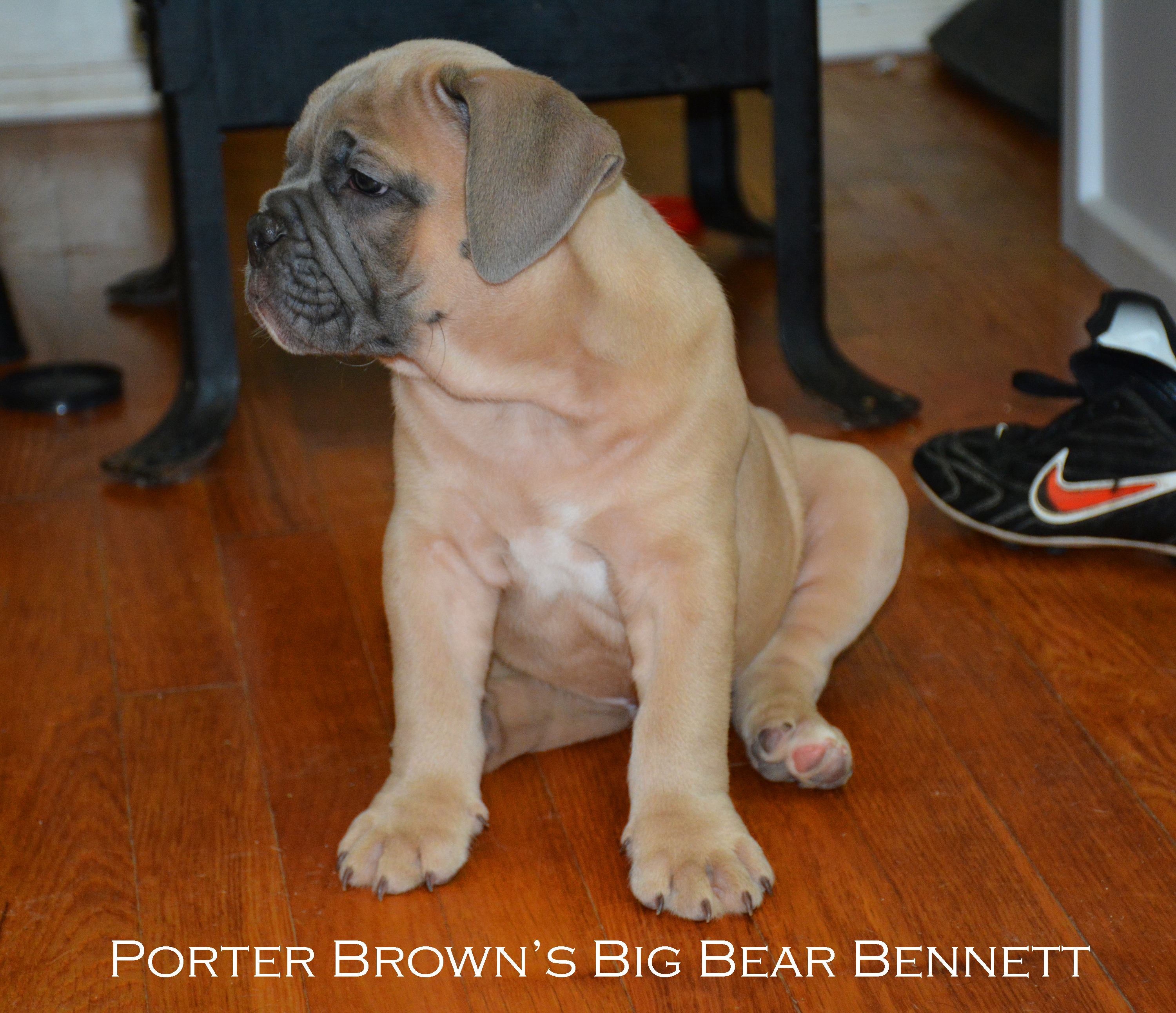 Porter-Brown's-Big-Bear-Bennett.jpg