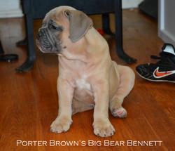 Porter-Brown's-Big-Bear-Bennett.jpg