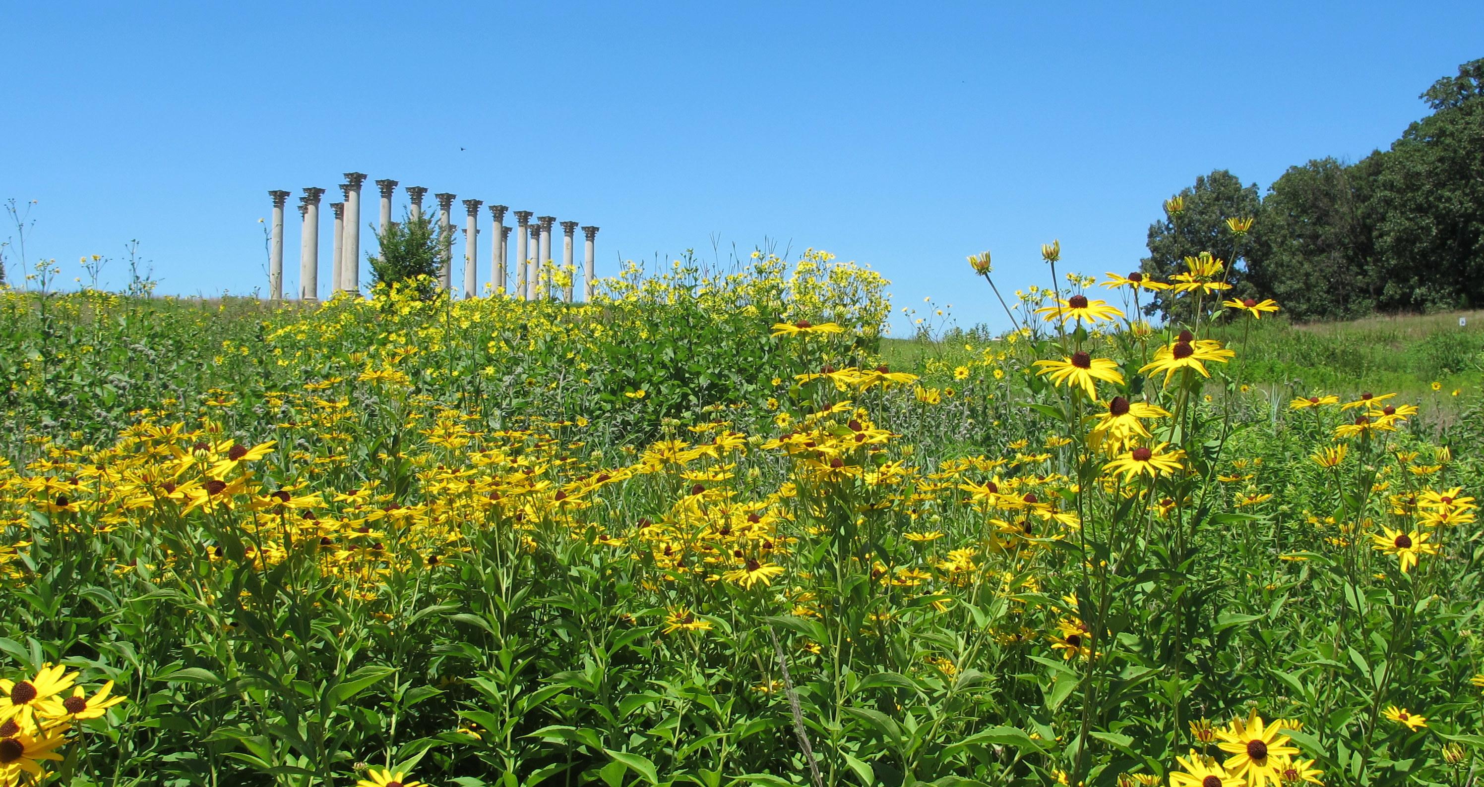 National_Arboretum_in_July_(23490966971)