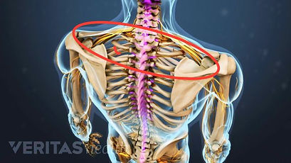 spinal-canal-spinal-cord (1).jpg