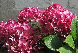 maison-du-saule-hotes-location-vacances-fleurs
