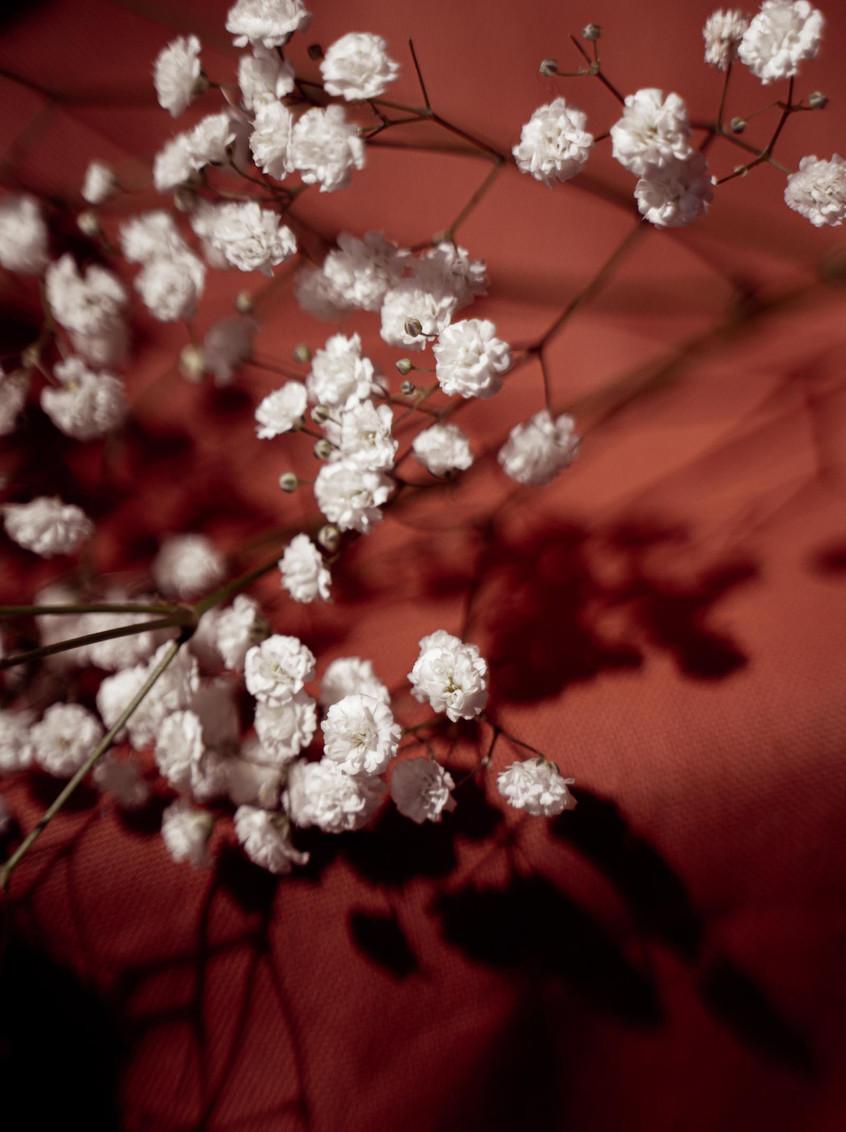 fleurs blanches, ombre sur tissus rouge brique, photographe de famille à la rochelle