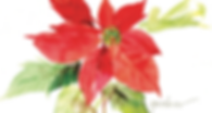 poinsettia order.png