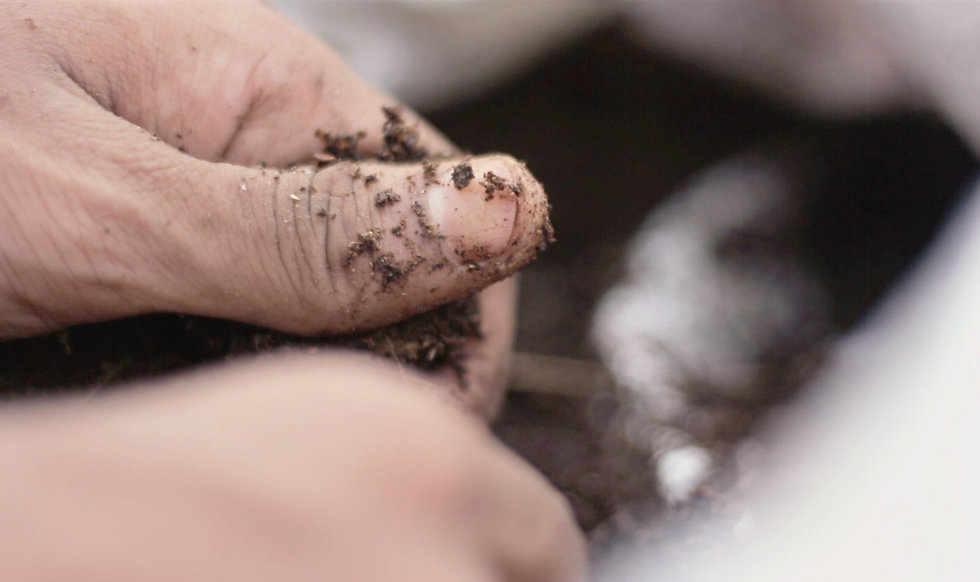 home composting webinar.jpg