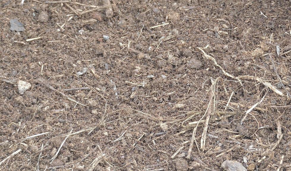 home composting tips.jpg