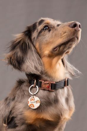 @lucky_the_mini_dachshund