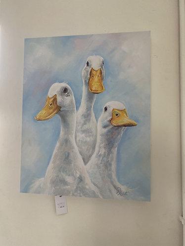 3 White Ducks