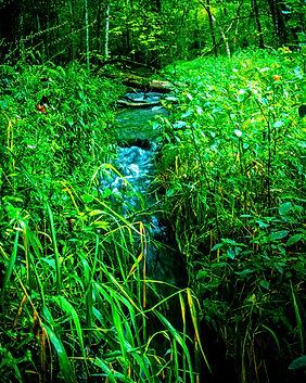 Beaver Creek near Caledonia, MN