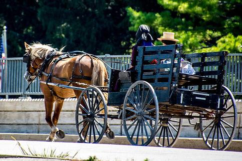 Amish buggy in Preston