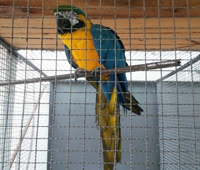 Fiscalização da SEMAD apreende 54 aves em Ganhães