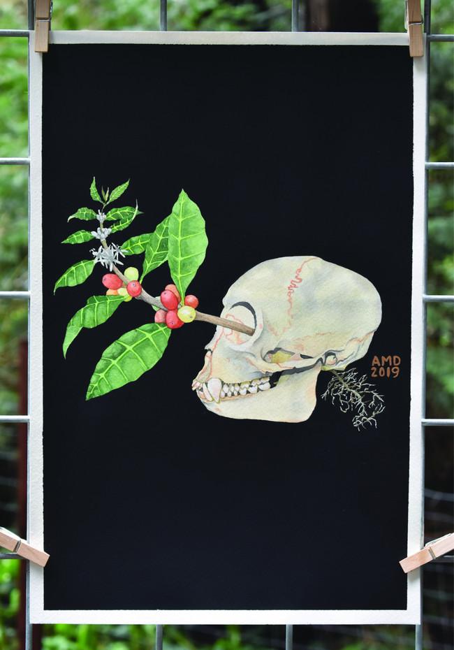 Project Extinction - Coffea arabica