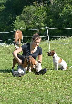 Chien, Canin, Rééducation, massage, stretching, physiothérapie manuelle équin, Harmony Animal Physio