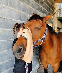 Cheval, Rééducation, massage, stretching, physiothérapie manuelle équin, Harmony Animal Physio