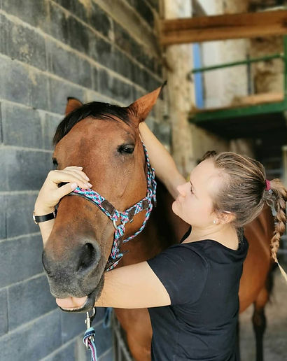 Cheval, Chien, Rééducation, massage, stretching, physiothérapie manuelle équin, Harmony Animal Physio