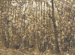 Arbres et sous bois- brou de noix