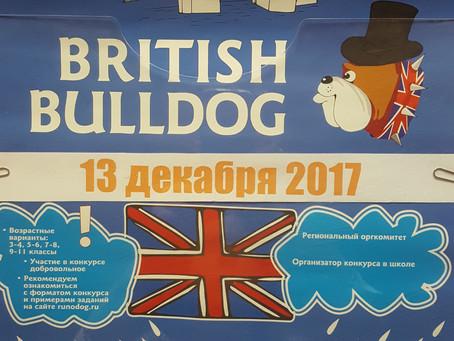 BRITISH BULDOG