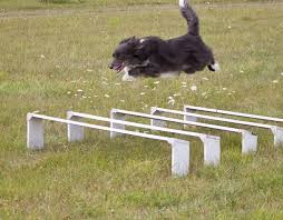 Broad Jump.jpg