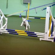 Beanie - jump.jpg