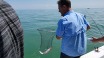 Catching a Walleye