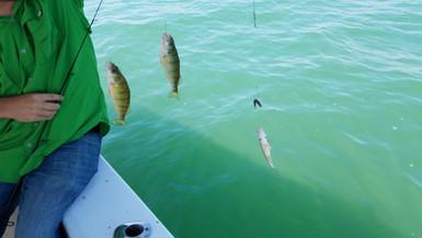 Triple Perch Catch!