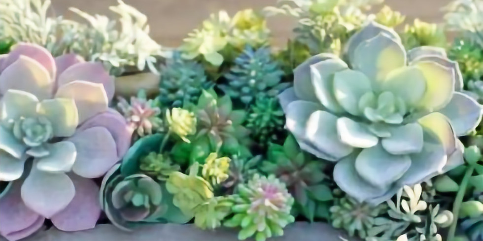 Sip & Create a Succulent Container