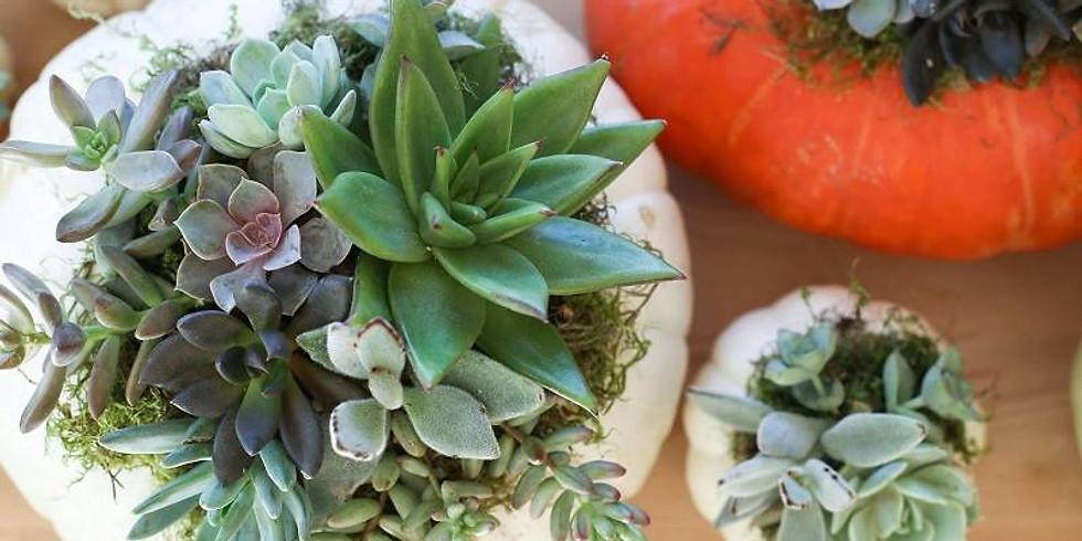 Pumpkin Sip & Succulents