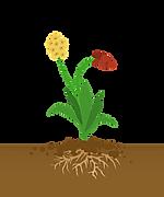 flowering-plant-3498265_960_720.png