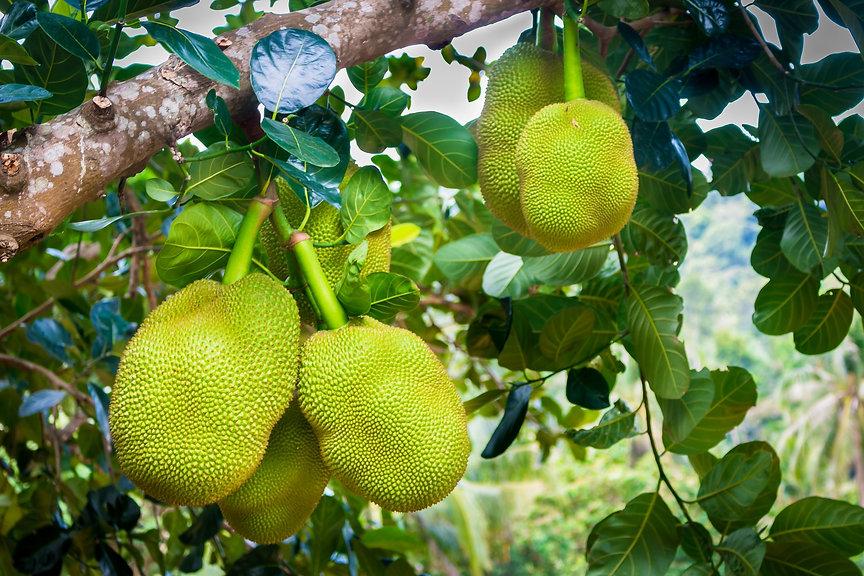 jackfruit-3717304_1920.jpg