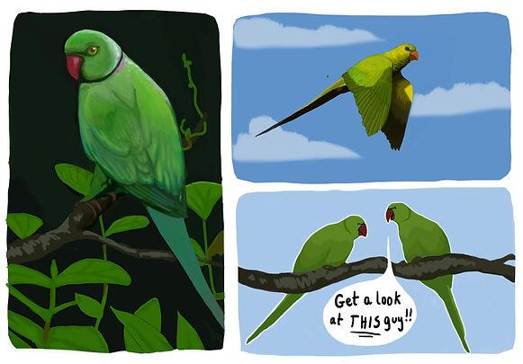 parroto_edited-2.jpg