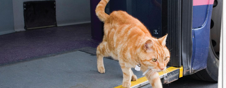 cat bus.jpg