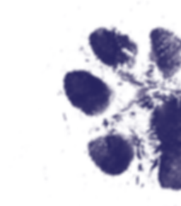 paw blue.png