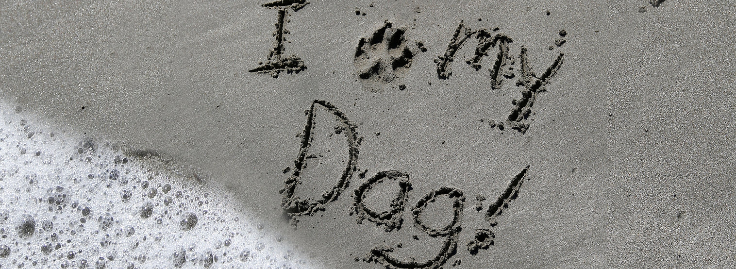 Ilove my dog.jpg