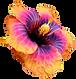 Hibiscas 2.png