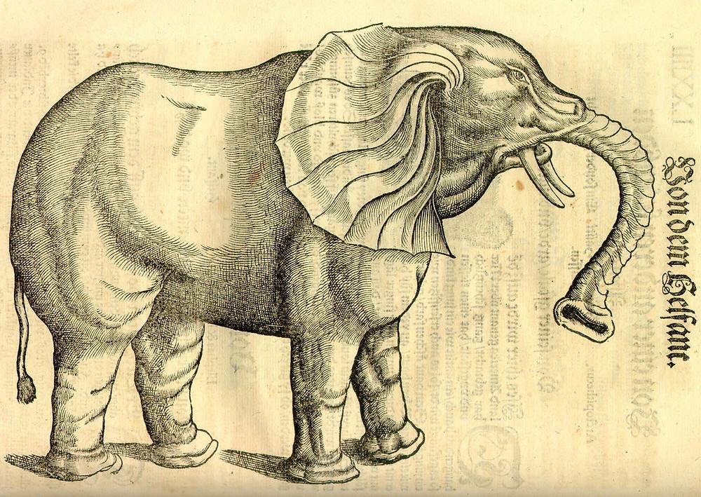 Gesner Elephant