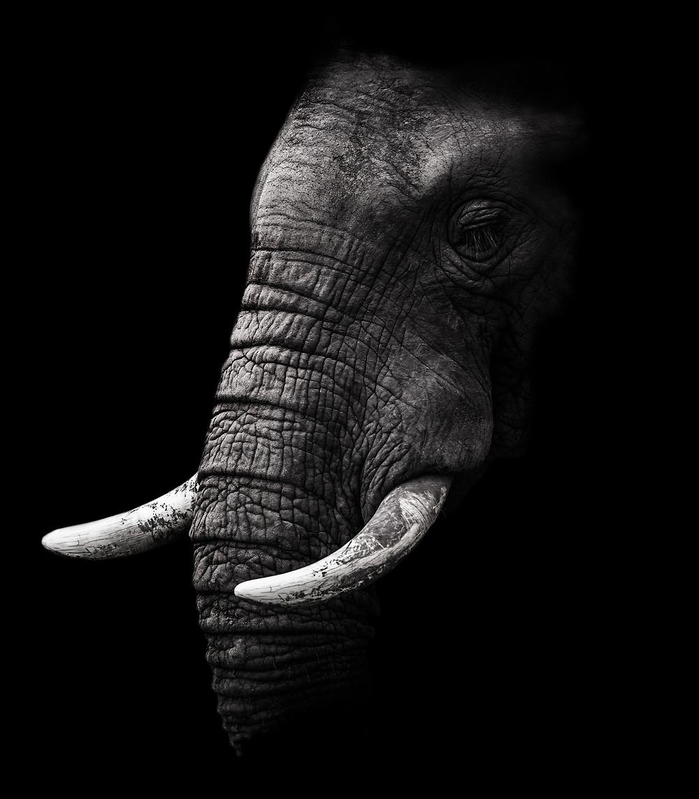 Wise elephant.
