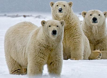 The Arctic Pledge