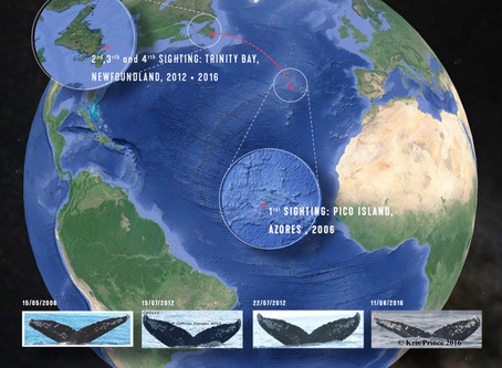 Happy Whale project and how to participate to Whale mapping