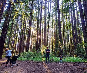 Family in the Redwoods.jpg