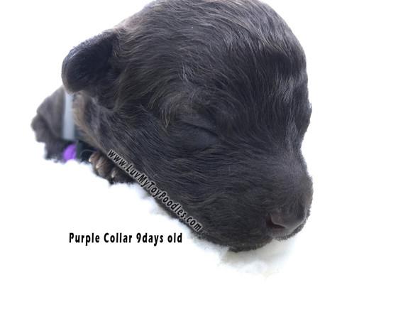 ML.Purple_edited.jpg