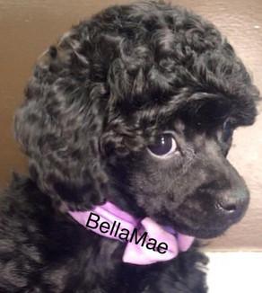 BellaMae