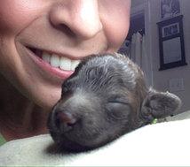 LJ Newborn
